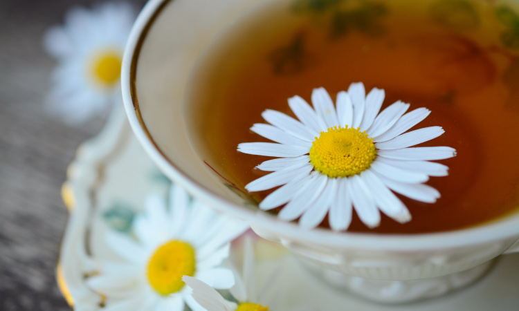 Closeup of a vintage cup and saucer of chamomile tea with chamomile flowers floating in and next to it